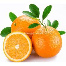 Chinese Fresh Quality Navel Orange