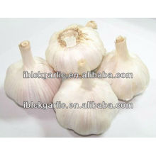 Black Garlic Preventing and Curing of Cancer