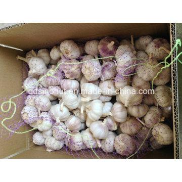 Фиолетовый Белый Чеснок 6.5см Китай Происхождение