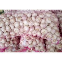2017 Chinese Fresh Pure White Garlic seeds