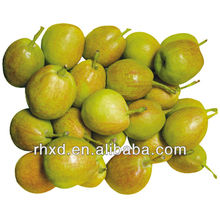 Синьцзян сладкие ароматные груши для экспорта
