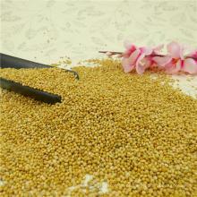 Colheita 2016 Amarelo / Branco Broom Milho Millet