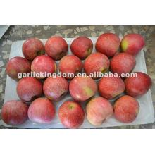 Nuevo cultivo sin Qinguan manzana de Shaanxi