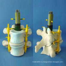 Медицинское обучение Расширение модели скелетного скелета человека (R140104)