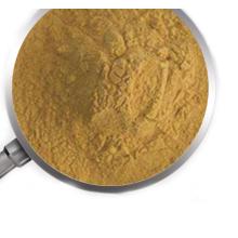 Poudre d'extrait de champignon crinière de lion directe d'usine
