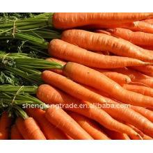 china fresh carrot price 2011 new crop