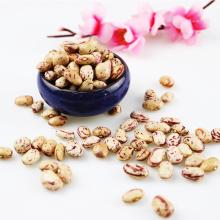 Novas culturas Xinjiang Rodada tipo de luz feijão salpicado Cranberries Feijão seco da China