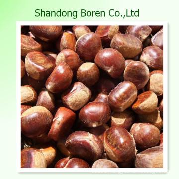 Offering High Quanlity Fresh Chestnut