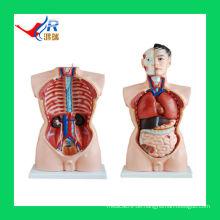 85CM fortgeschrittene PVC-männliche weibliche Organe (19 Teile), Wissenschafts-Modell