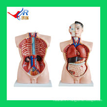 85CM en PVC avancé Hommes Organes Femelles (19 pièces), Modèle de Science