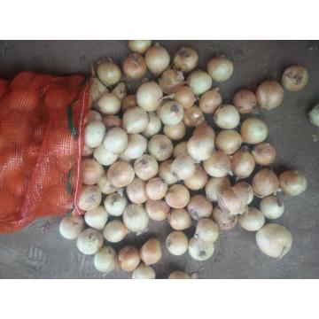 High Quality Fresh Yellow Onion