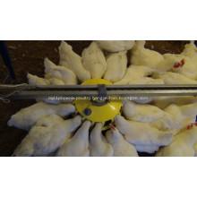 Breeder Pan Feeding system