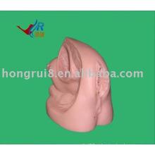Modelo avançado de genitália interna e externa feminina