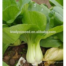 MPK09 Youli madurez temprana venta caliente semillas verdes pakchoi para plantar