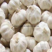 New Crop Alho Fresco Branco Puro e Branco Normal