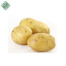 Bangladeshi-Kartoffel / frische Kartoffel / organische Kartoffel