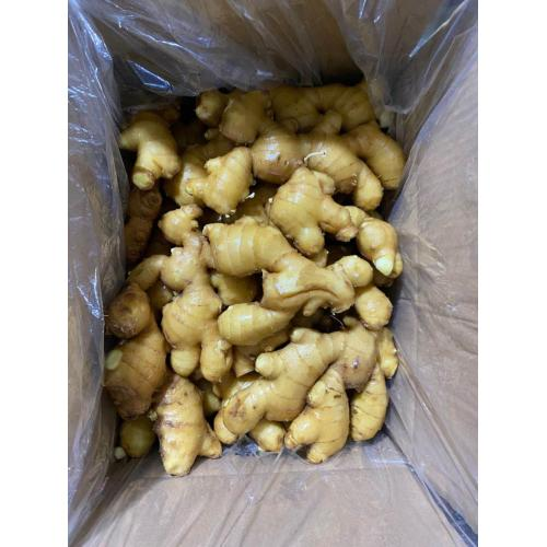 2020 New Crop Fresh Ginger
