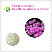 Fornecimento De Fábrica de alta Qualidade Diretamente Extrato Mesemonbrous Tortuosum 98%