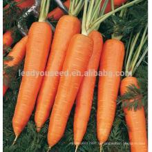 ACA071 Honghuo haute qualité 8 pouces entreprises de semences de carottes rouges