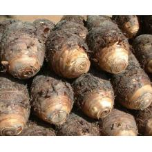 A Grade New Crop Taro for Sale