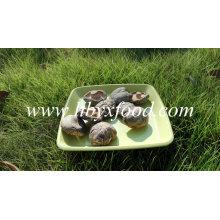 Légume sec séché Shiitake champignon