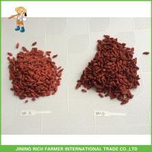Secado Goji Berry Exportador en China Goji Berry 380g granos / 50g Precio bajo
