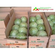 Chou vert frais chinois bon marché