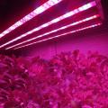 Hydroponic LED Grow Light  Strip