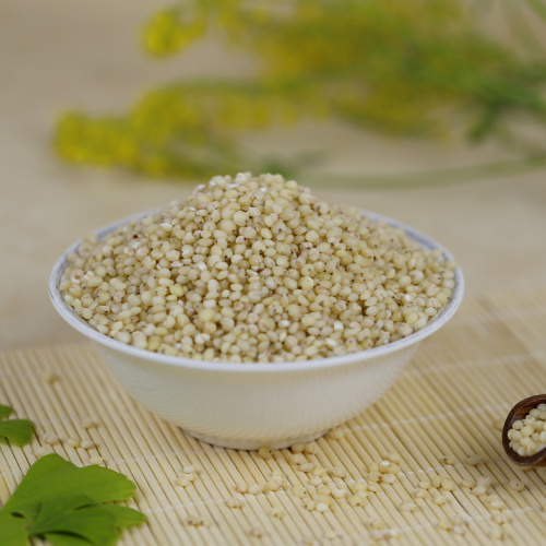Wholesale First-rate Good quality sorghum rice
