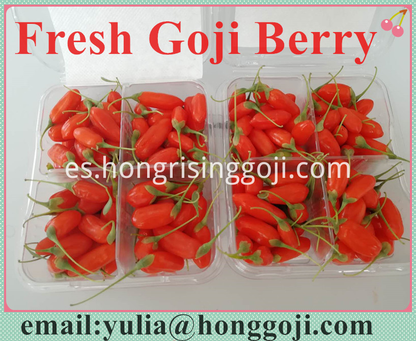 Fresh Goji Berry1