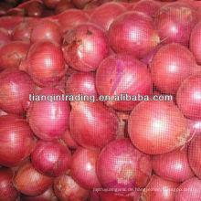 frische Zwiebel für Thailand