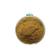 Extrato em pó orgânico seco de morchella esculenta