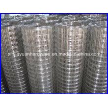 Export Standard Welded Wire Iron Mesh /Welded Wire Mesh