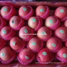 Embalado em 20kg Carton Fresh Qinguan Apple