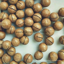 Good Quality Macadamia Nuts From China