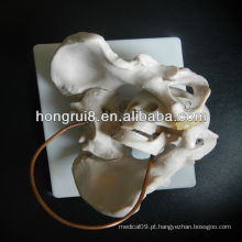 2013 HOT SALE demonstração de nascimento modelo de obstetrícia