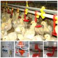 Máquina de alimentação de aves de capoeira automática para frango