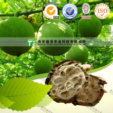 for Pregnant Women Dried Herbal Medicine Snakegourd Fruit