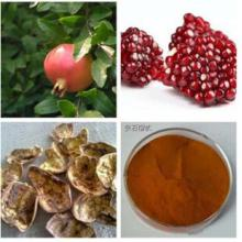 Punica Granatum PEFor Health Benifits