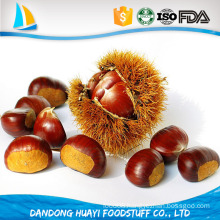 best Chinese chestnuts for sale--organic Dandong chestnuts