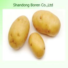 Fornecendo batata padrão internacional da China