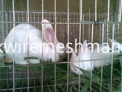ss-wekded-mesh-rabbits-cage