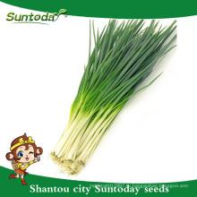Suntoday vegetable органическое сад Ф1 купить онлайн английский воды plantting зеленый лук-севок лук-шалот (81003)