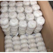 Exportation nouvelle récolte fraîche bonne qualité ail blanc