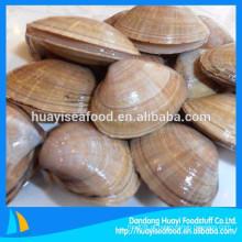 Nova aterragem congelados clam no shell