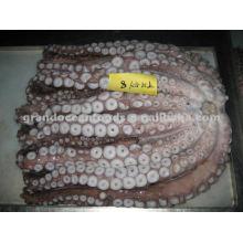 Frozen octopus leg