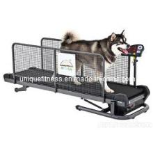 Cinta, cinta del animal doméstico, funcionamiento máquina caminadora para perros