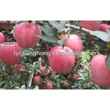 Шаньдун происхождения поставку высокое качество Fuji apple