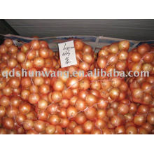 fresh yellow onion with good quality