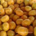 Golde Supplier of Sweet Baby Mandarin